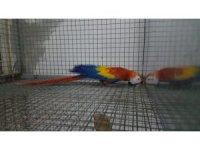 """Zeytinburnu'nda """"papağan"""" operasyonu: 2 gözaltı"""