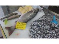 100 kilo fındığı olan bu balığı alabilir