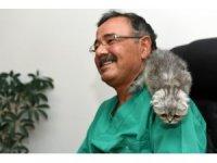 Yavru kedi cerrahi müdahale ile hayata tutundu