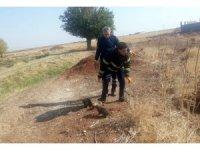 Mardin'de 5 köpek yavrusunu çuvala koyup lağım çukuruna attılar