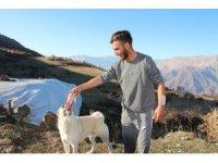 Ayı saldırısından kurtaran köpeklerine yemek ziyafeti çekti