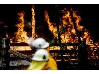 Avustralya'da orman yangınlarıyla mücadele sürüyor