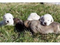 Beş minik yavruyu çuvala koyup ormana attılar