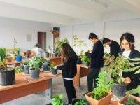 Çavdarhisar'da ''Süs bitkileri yetiştiriciliği'' kursu