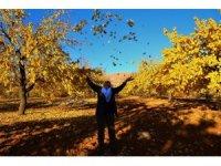 """Elazığ'da """"altın yaprakların"""" görsel şöleni"""