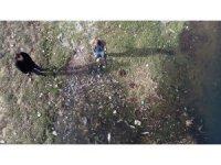 Karabük'te çevre katliamı