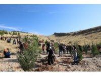 Mardin'de Bir Dünya Kadın Hatıra Ormanı oluşturuldu