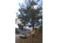 Reklam için ağaçlara çivi çaktılar