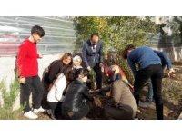 Öğrenciler okul bahçelerine fidan dikti