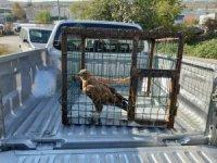 Koruma altına alınan kızıl şahini yakalayan şahsa para cezası yağdı