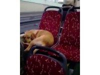 İstanbul'da otobüs şoföründen insanlık örneği