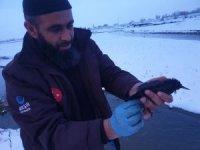 Ağrı'da donmak üzere olan kuşları yardım ekibi kurtardı