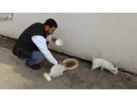 Masrafları çoğalan kedileri için hayvansever arıyor