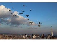 Yüzlerce güvercin gökyüzünü süsledi