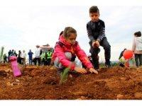 Muğla ve Aydın'da 2019'da 1 milyon fidan toprakla buluştu