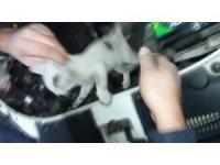Otomobil motoruna giren yavru kedi kurtarıldı