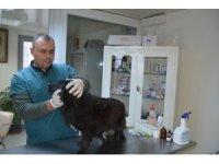 Aliağa'da 3 bin 240 sokak hayvanı tedavi edildi