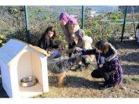Umuttepe'deki sokak hayvanlarına yardım eli