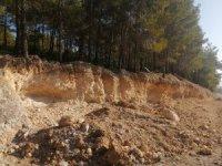 Yarım asırlık ağaçların köklerini tahrip ettiler