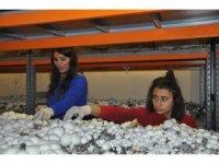 Girişimci kadınlar kurduğu tesiste yılda 18 ton mantar üretecek