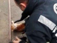 İtfaiye ekiplerinden yavru kedi kurtarma operasyonu