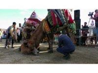 Pehlivan develer kozlarını Buharkent arenasında paylaştı