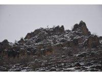 Kar yağdı Dicle Elektrik'in zorlu kış mesaisi başladı