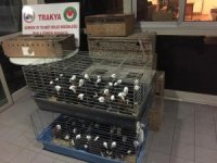 İpsala Sınır Kapısı'nda ticareti yasak olan 235 canlı güvercin ele geçirildi