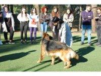 Köpek eğitim kursuyla köpeklerle daha iyi iletişim kurabilmek amaçlanıyor