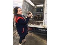 Başkan Demirtaş'tan sokak hayvanları için çağrı