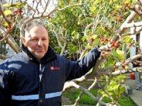 İzmir'de dut ağacı kış ortasında meyve verdi