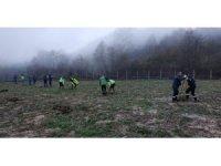 Büyükşehir Yuvacık'taki dolgu alanını ağaçlandırdı