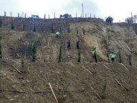 Ulaşlı'da toprak kayması yaşanan arazi ağaçlandırıldı