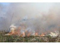 Antalya'daki sazlık yangını kontrol altına alındı
