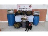Şanlıurfa'nın Suruç ilçesinde 105 kilo esrar ele geçirildi