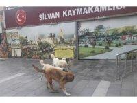 Silvan'da başıboş köpekler korkutuyor