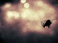Avustralya'da felaketlerin ardı kesilmiyor: Bu kez de 'zehirli örümcek' uyarısı yapıldı