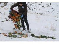 Iğdır'da av ve yaban hayvanları için doğaya 115 kilogram yem bırakıldı