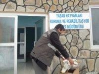 Yaralı Büyük ak balıkçıl kuşu tedavi altına alındı