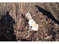 Başını bidona sıkıştıran köpeği itfaiye kurtardı