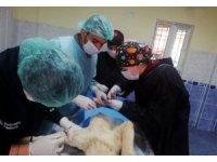 Kaza sonucu ağır yaralanan kedi ve köpek operasyonla hayata tutundu