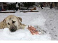 Mardin'de duyarlı vatandaş sokak köpeklerine et dağıttı