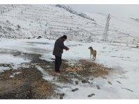 Mardin Büyükşehir Belediyesi karlı havada sokak hayvanlarını unutmadı