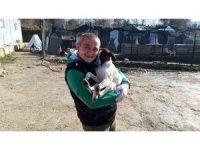 Lapseki'de 2 ayda 406 sokak hayvanı kısırlaştırılarak aşılandı