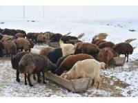 Kış mesaisindeki besicilerin yardımcıları: Eşek arabaları
