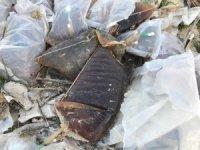 Tıbbi atıklar ırmak kenarına döküldü