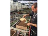 Gölbaşı Belediyesi kendi çiçeğini üretiyor