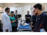 Siirt'te yaralı hayvanlar sevgiyle tedavi ediliyor