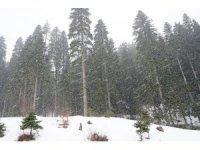 Kastamonu'da Ilgaz Dağında kar yağışı etkili olmaya devam ediyor
