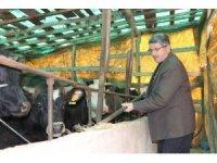 Samsun'da büyükbaş hayvan dolandırıcılığı iddiası: '220 bin TL'lik vurgun'